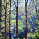 best all terrain stroller review